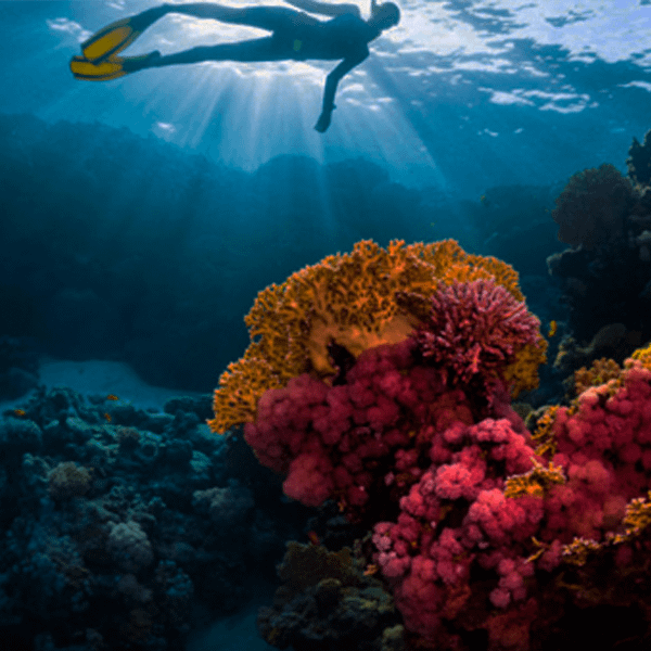 Isla Fuerte Ruta del Coral